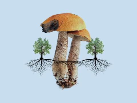 The Future is Fungal, 12 Mar 2019, 6 15pm-7 15pm — The